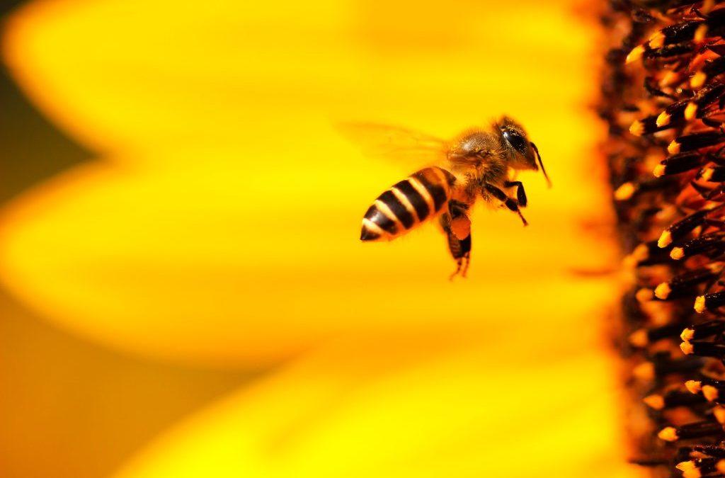 Stärk och föryngra dig med honung – men se upp för fusket