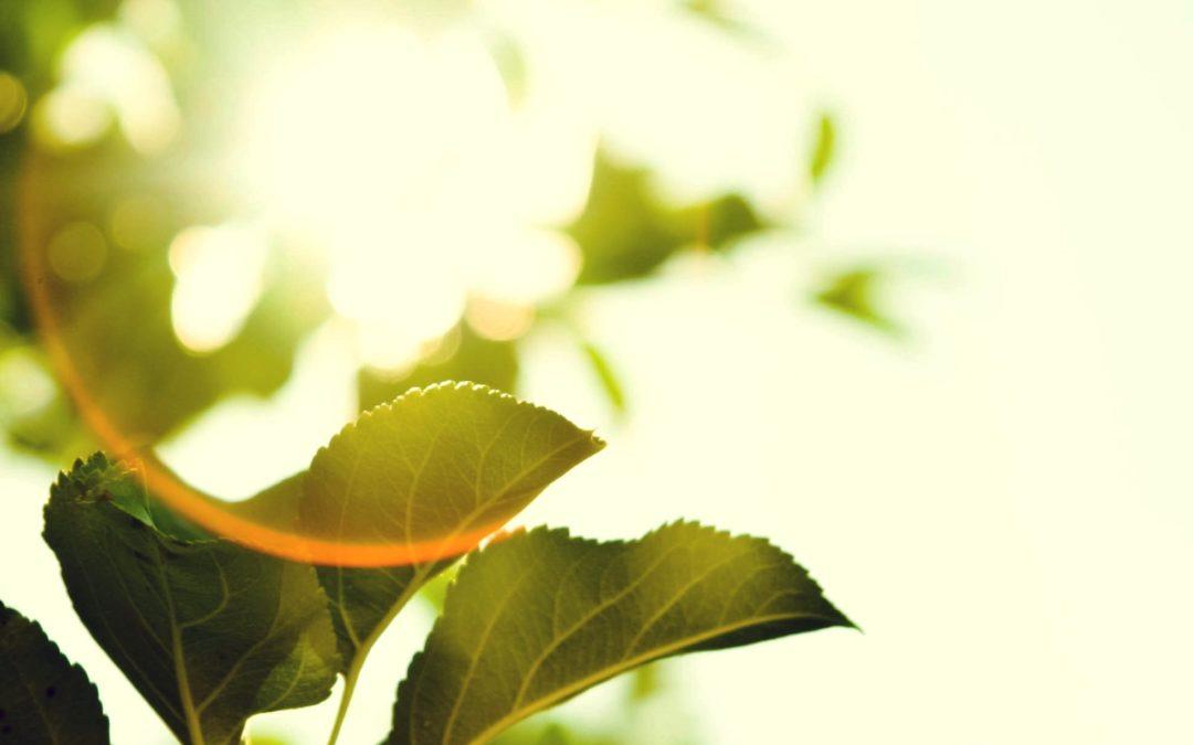 Veckans kundaliniyioga: Skapa möjligheter med grön energi