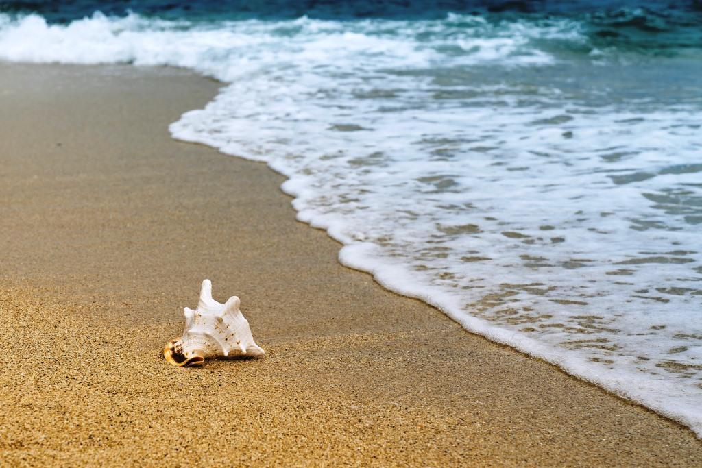 Snäcka på stranden. Vågor som sköljer in.