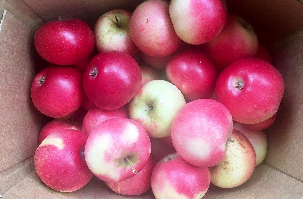 Recept: Papadums och äppelchutney