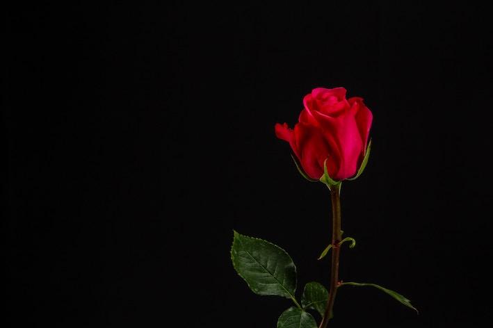 7 anledningar att använda rosenvatten dagligen