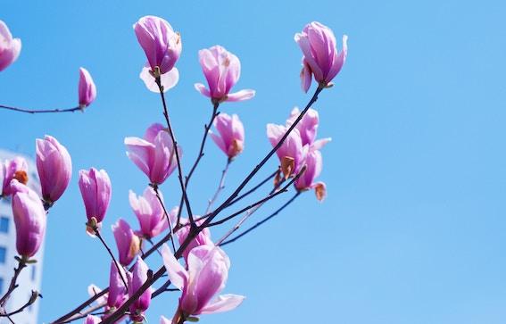 3 enkla ayurvediska rutiner för en hektisk vår