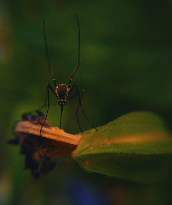 Håll insekterna borta med naturliga medel